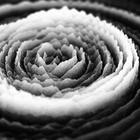 Quantum Entanglement  20 Hz - Semiconductor