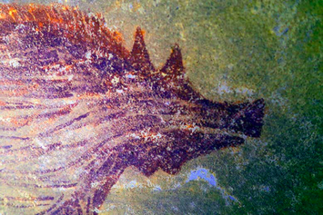 UN Year of Creative Economy for Sustainable Development World's oldest cave painting, discovered January 2021, Indonesia, Science Advances © A. A. Oktaviana, ARKENAS/Griffith University licensed under CC BY-NC 4.0